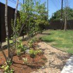 雑木と縦格子フェンスのお庭6