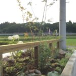 時間とともに変化し成長するお庭1