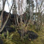 出展庭園(信州の庭)3