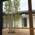 自然と調和する雑木の庭2