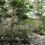 自然と調和する雑木の庭1